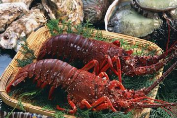 Tôm hùm lửa Côn Đảo - đặc sản giá trị được du khách 'săn đón'