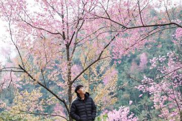 Quên mùa lúa chín đi, Mù Cang Chải còn có mùa đào rừng đẹp ngẩn ngơ!