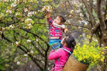 Săn mùa hoa Sơn tra Yên Bái tinh khôi trên những nương đồi bát ngát