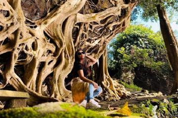 Sống ảo siêu nghệ tại cây si cổ thụ ở Đắk Lắk