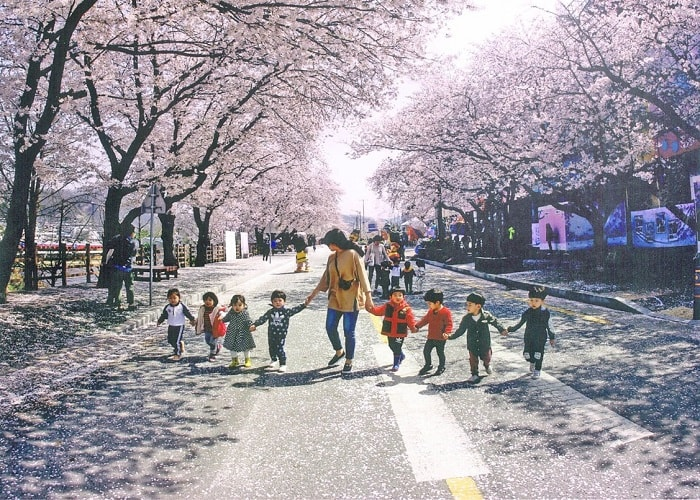 Các lễ hội xuân tại Hàn Quốc được mong chờ nhất trong năm