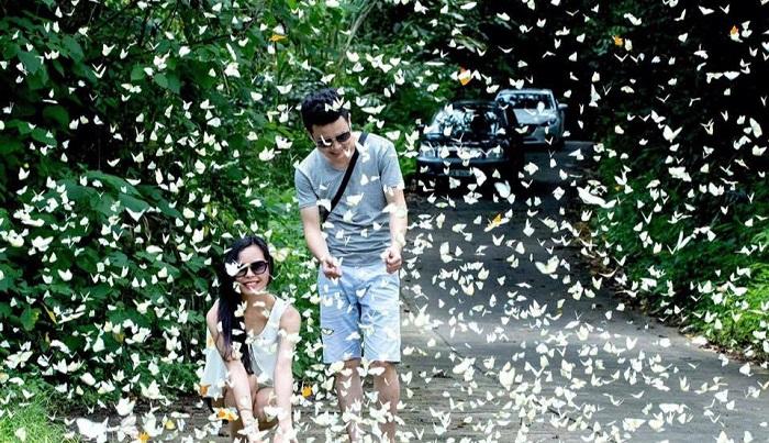 Mùa đom đóm Cúc Phương, Ninh Bình thường bắt đầu từ tháng tư