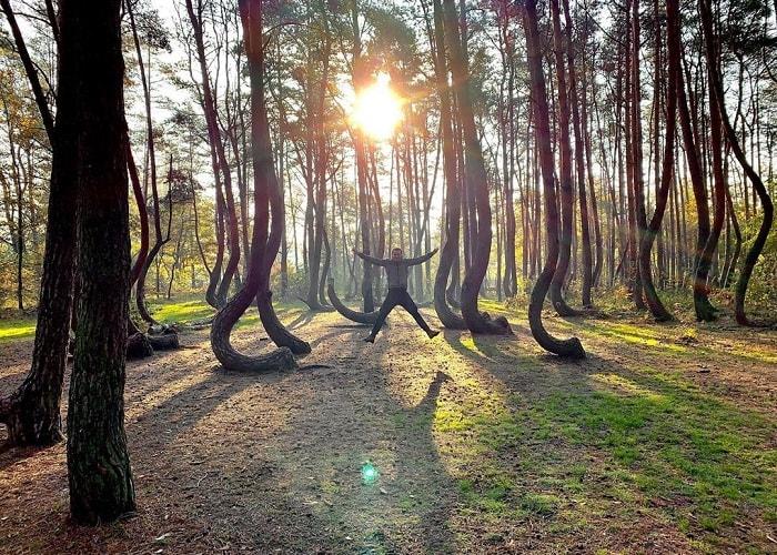 Khám phá sự bí ẩn của khu rừng cong Crooked Ba Lan