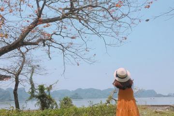 Tổng hợp những địa điểm chụp hoa gạo tháng 3 đẹp nhất ở Hà Nội