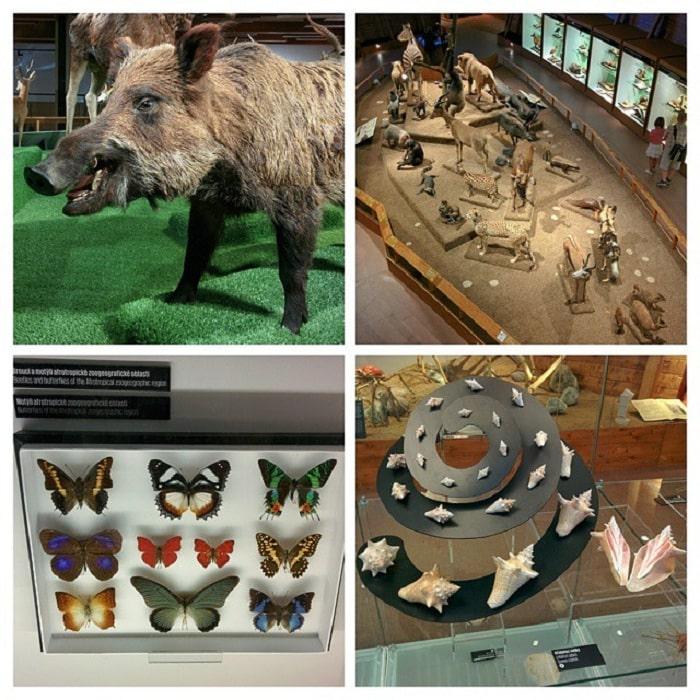 động vật - triển lãm hay tại bảo tàng Quốc gia Séc