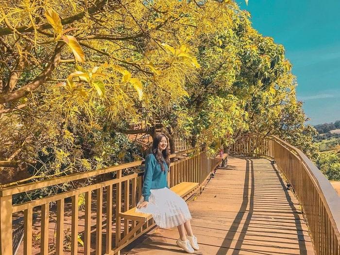 con đường Hàn Quốc ở Đà Lạt - lãng mạn dưới hàng cây