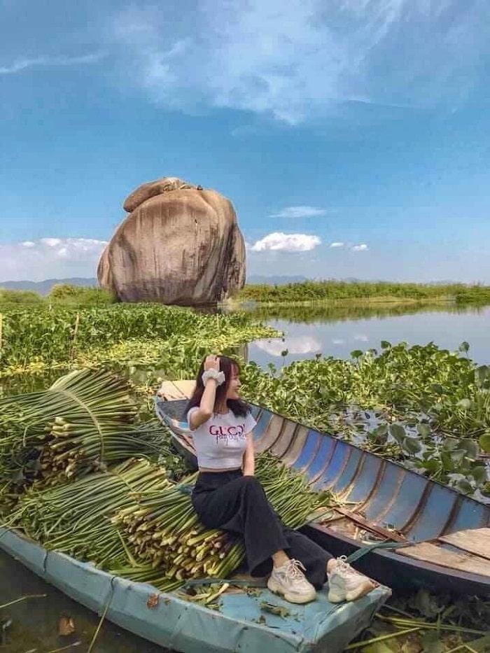 thu hoạch sen - hoạt động hấp dẫn tại Hồ Bàu Ngừa