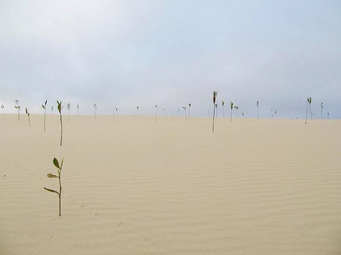 Đồi cát vàng Nhĩ Hạ - chiêm ngưỡng cảnh đẹp