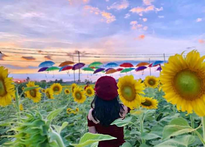 hàng ô đủ màu - điểm thú vị của Đồi Hoa Mặt Trời ở Đồng Nai