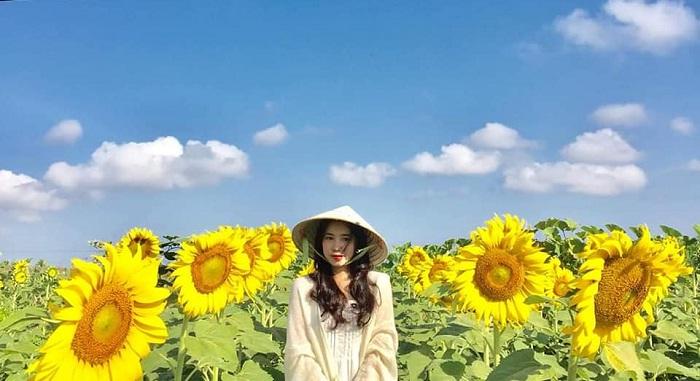 hoa cao và to - điểm nhấn của Đồi Hoa Mặt Trời ở Đồng Nai