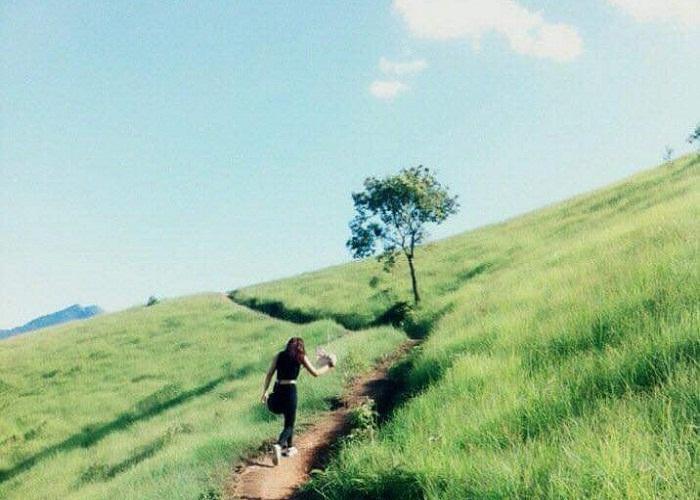 Check-in đồng cỏ Phiêng Mường xanh mướt đến ngẩn ngơ