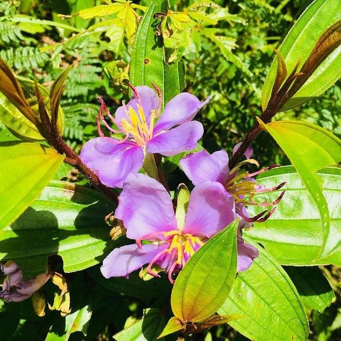hoa quý - điểm độc đáo của Núi Cà Đam