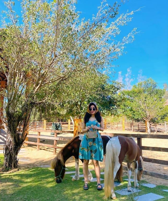 kinh nghiệm du lịch Quy Nhơn 3 ngày 2 đêm - thăm FLC Safari Zoo
