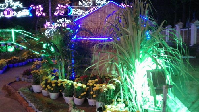 kinh nghiệm du lịch Tết Côn Đảo - ngắm đường hoa Tết