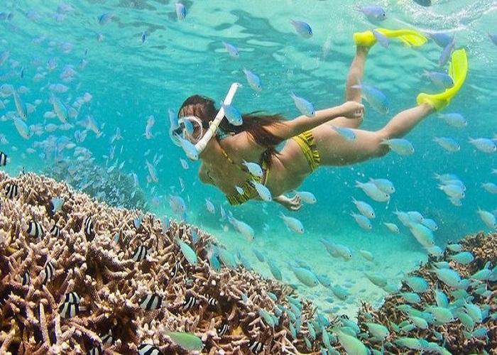 Bật mí kinh nghiệm lặn ngắm san hô Côn Đảo hữu ích