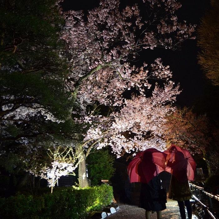 Matsumoto Castle - cherry blossom festival
