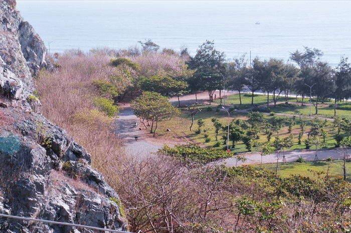 Apricot flowers on the foot of Small mountain-huynh-nhi-2