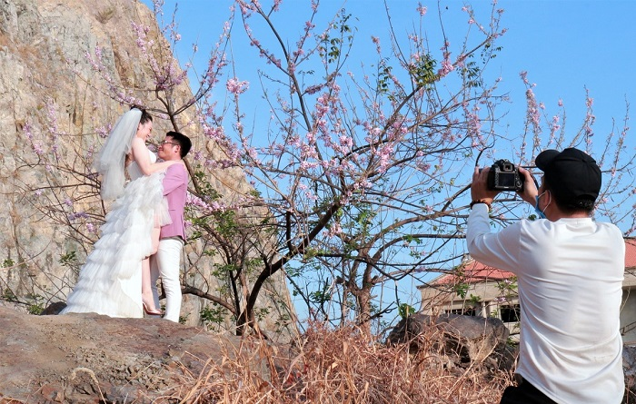 Flowering season in Vung Tau apricot blossom bloom