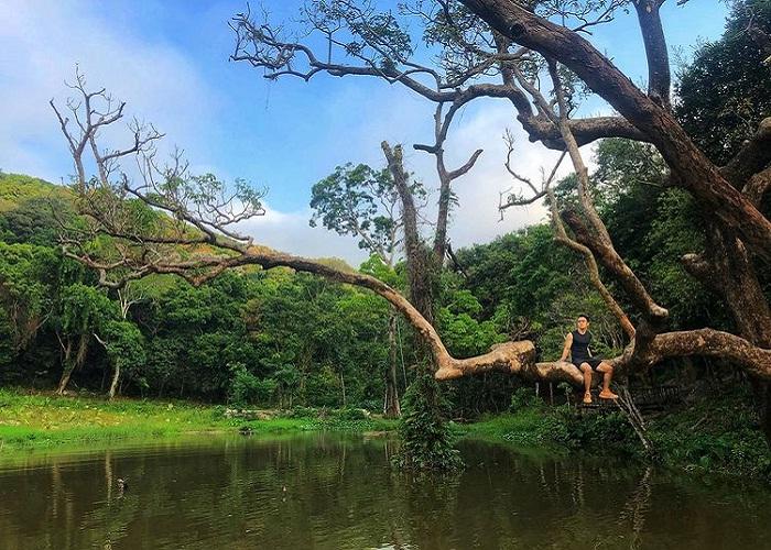 ngồi trên cây cổ thụ - trải nghiệm thú vị tại Nhất Lâm Thủy Trang Trà Đà Nẵng