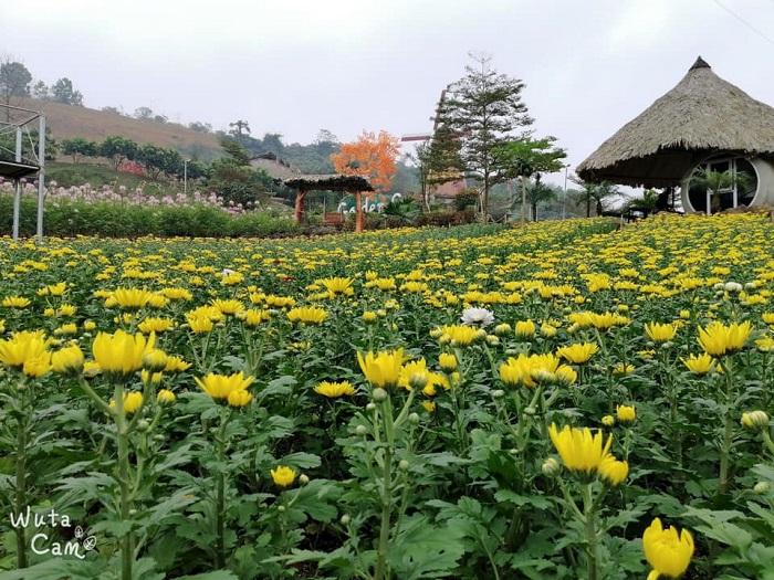 Vườn hoa ở nông trại Golden Cow