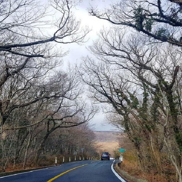 núi Hallasan Hàn Quốc - đường mòn Seongpanak