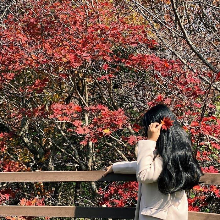 núi Hallasan Hàn Quốc - mùa thu