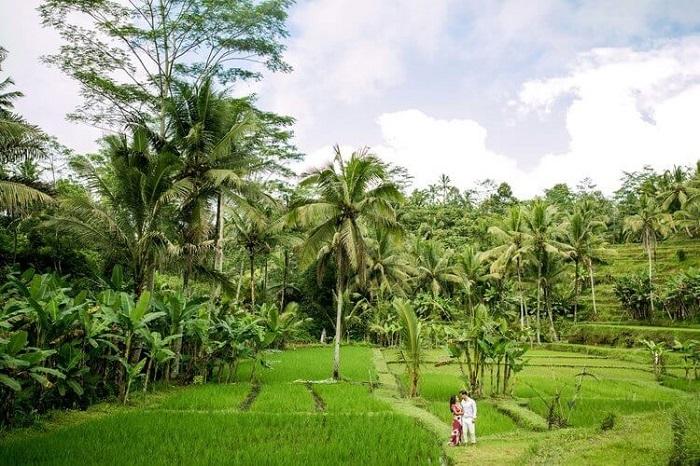 Cảnh đẹp ở ruộng bậc thang Tegalalang - Những nơi đẹp nhất để chụp ảnh ở Bali