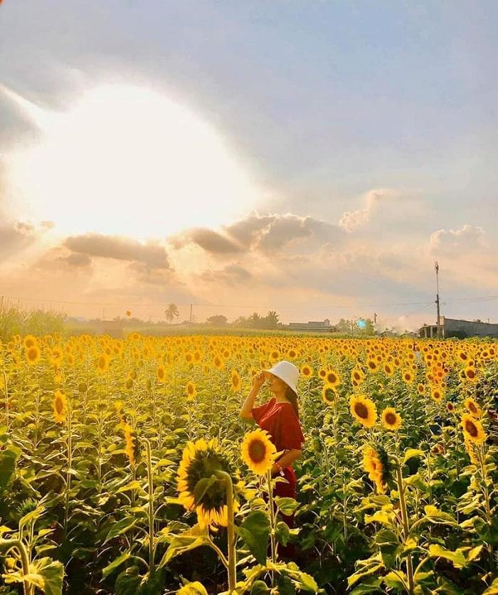 mùa hè - thời điểm lý tưởng để thăm Đồi Hoa Mặt Trời ở Đồng Nai