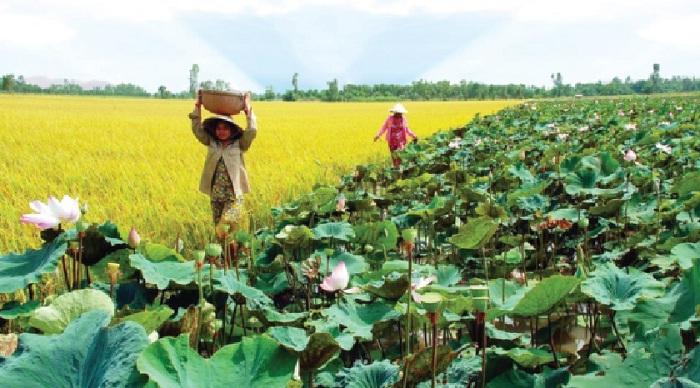 mùa sen nở và lúa chín - thời điểm lý tưởng để thăm Hồ Bàu Ngừa