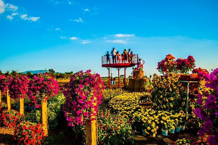 The flowers are arranged skillfully - the impressive point of Four Seasons Flower Garden in Dong Nai