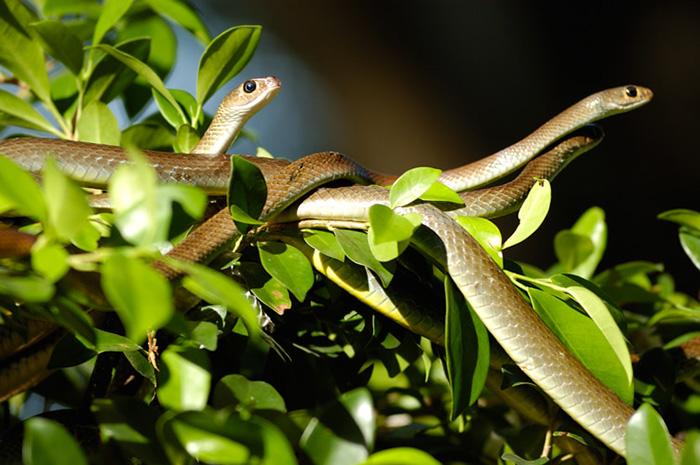 Trại rắn Đồng Tâm thu hút nhiều khách du lịch trong và ngoài nước đến tham quan, nghiên cứu. Ảnh: Nguyễn Nhật Minh