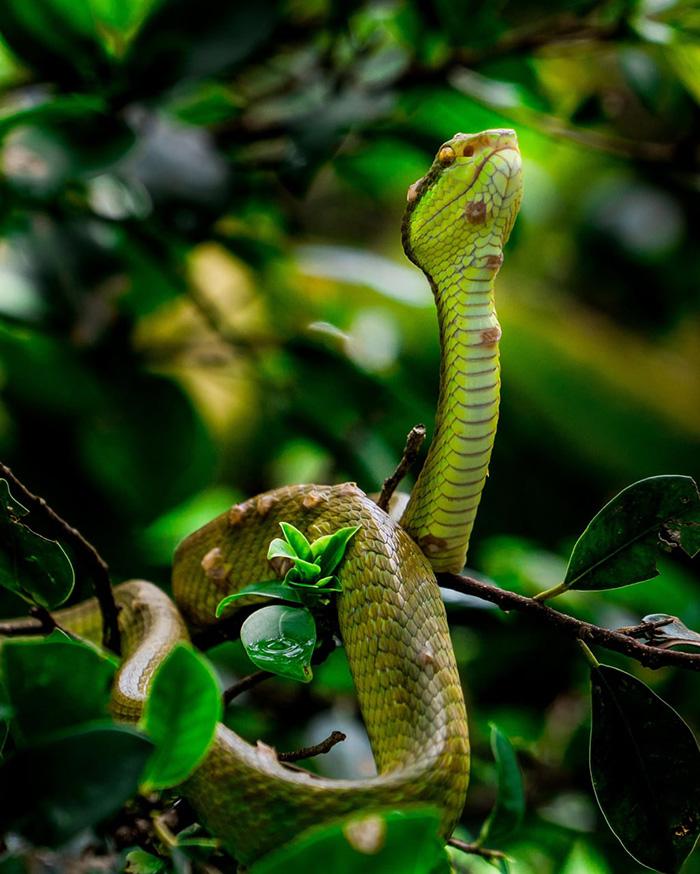 Trại rắn Đồng Tâm khá rộng và được chia làm 3 khu chính với những loài khác nhau. Ảnh:Nguyễn Nhật Minh. Ảnh: Nguyễn Nhật Minh