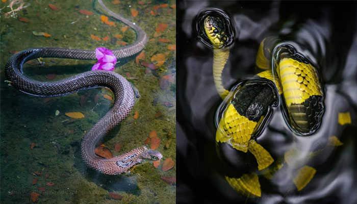 Giữa hồ trong trại rắn sẽ có tiểu đảo và có cây xanh, cũng là điểm trú ngụ của nhiều loại rắn. Ảnh: Nguyễn Nhật Minh