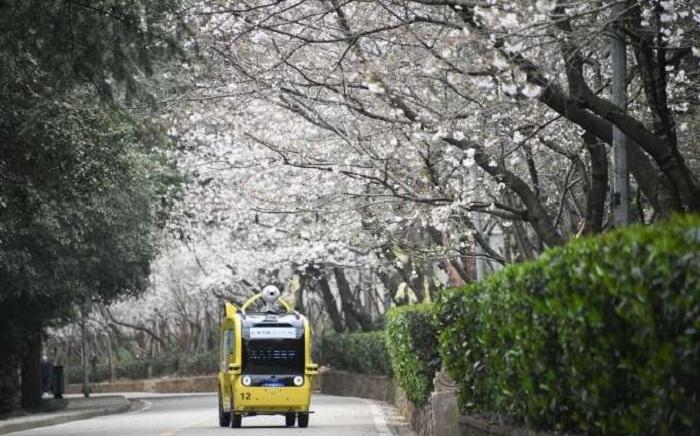 Mùa hoa anh đào Vũ Hán