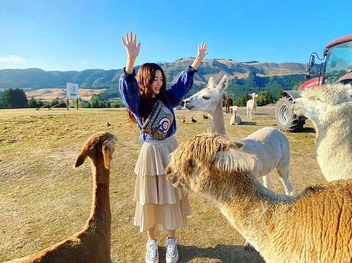Nông trại Agrodome Rotorua - địa điểm du lịch vui nhộn tại New Zealand
