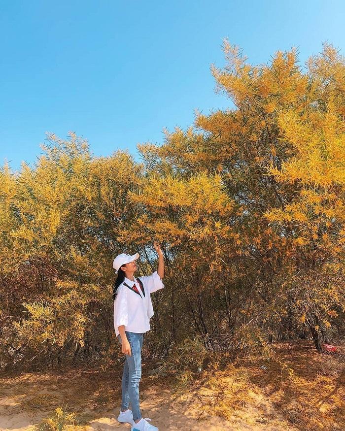 rừng keo lá tràm Phan Thiết