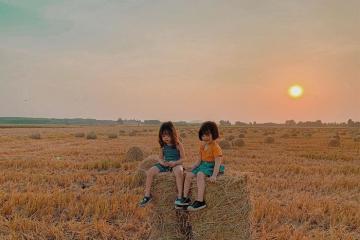 Check-in cánh đồng rơm gần Sài Gòn đẹp hơn bối cảnh phim!