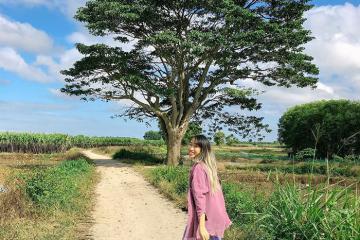 Tập hợp tọa độ 8 cây cô đơn sống ảo nổi tiếng nhất Việt Nam