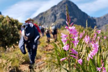 7 trải nghiệm du lịch Nam Phi phải thử nếu bạn là người yêu thiên nhiên