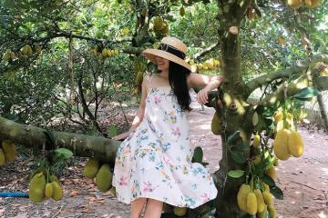 Ghé thăm vườn trái cây Cái Mơn - thiên đường cây ăn trái Bến Tre