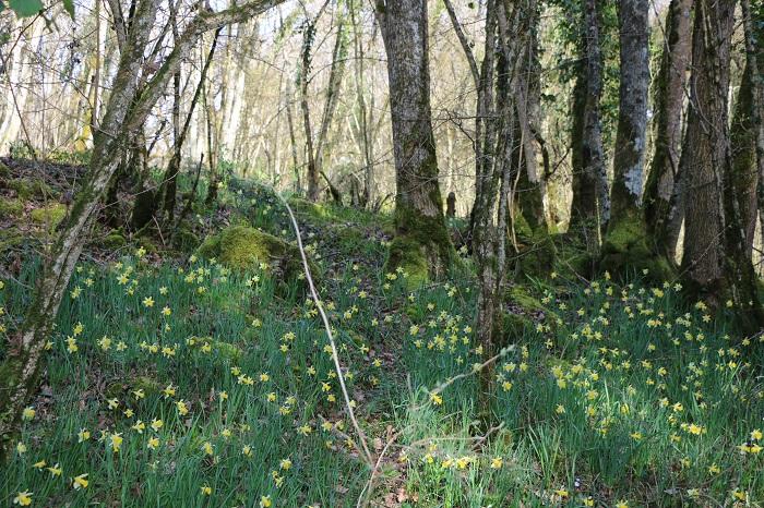 Rừng hoa ở Eclepens - Những điểm ngắm hoa mùa xuân ở Thụy Sĩ