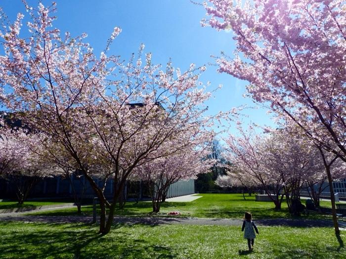 Hoa đào ở Lausanne - - Những điểm ngắm hoa mùa xuân ở Thụy Sĩ