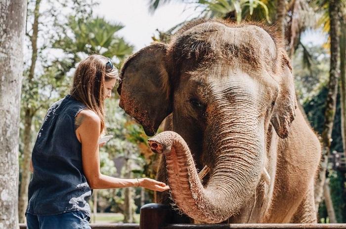 Đây là nơi chăm sóc những chú voi - Những địa điểm du lịch mới nhất ở Bali