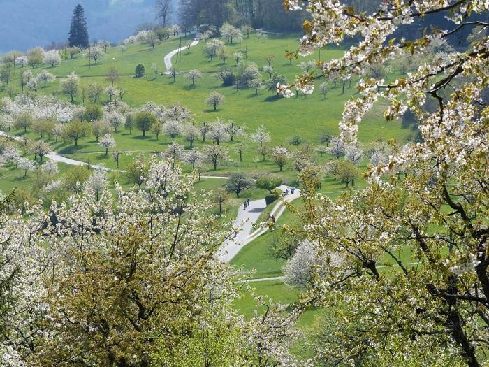 Hoa đào ở Nuglar và St. Pantaleon - Những điểm ngắm hoa mùa xuân ở Thụy Sĩ