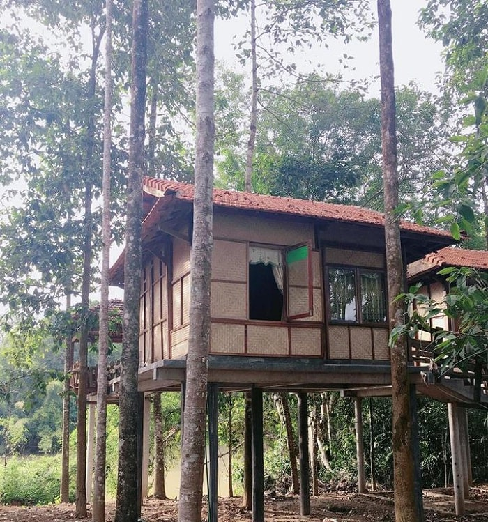 Paradise on the Tree - homestay in Dong Nai attracts many tourists