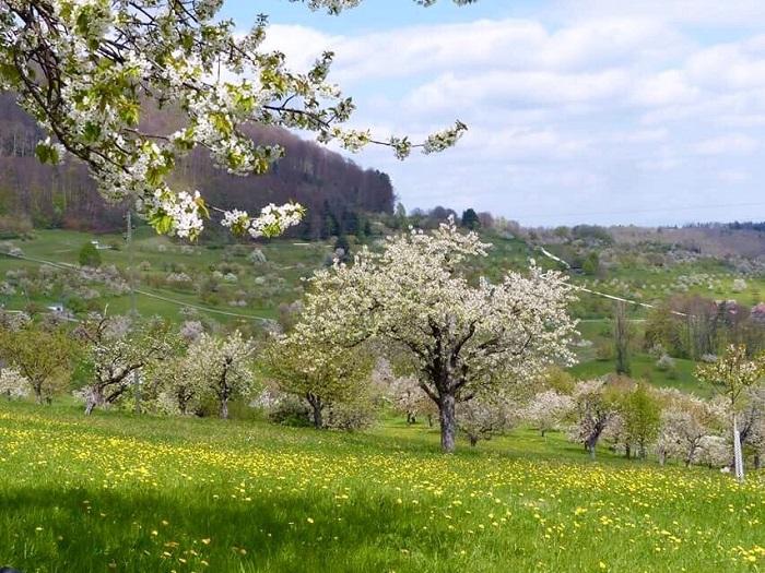 St.Pantaleon - Những điểm ngắm hoa mùa xuân ở Thụy Sĩ