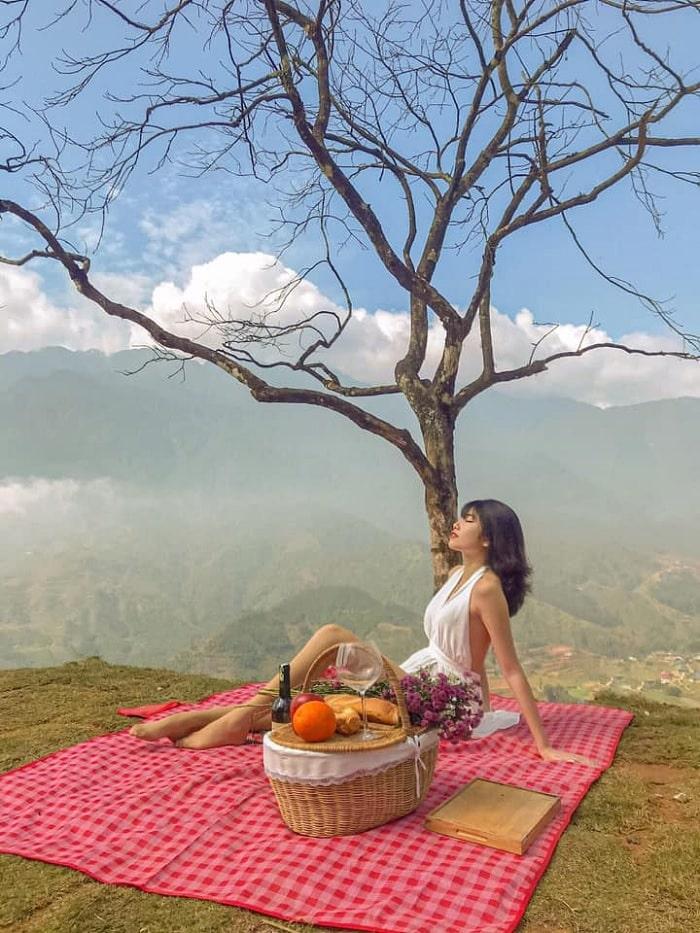 cây cô dơn - góc vui chơi tại Điểm sống ảo mới ở Sapa - Moana Sapa
