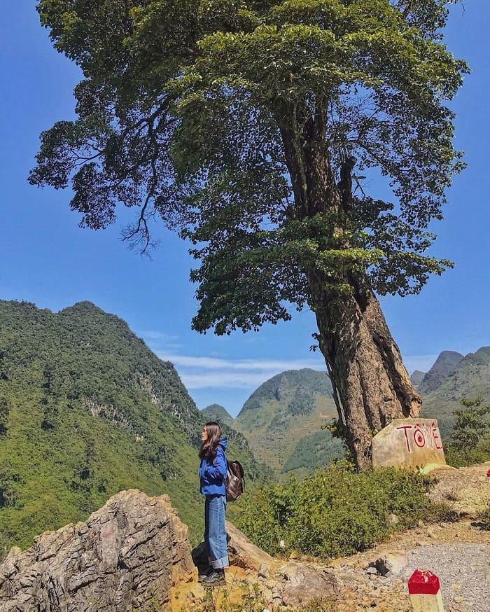 Truy lùng tọa độ check in cây cô đơn Hà Giang