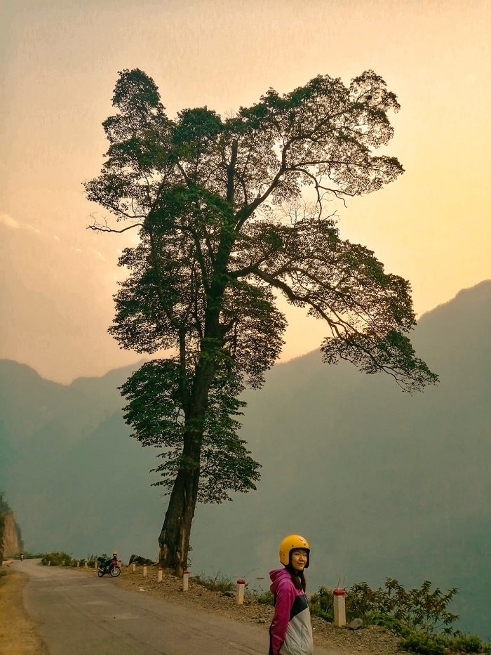Admire the lonely tree Ha Giang