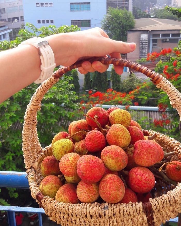 Thanh Ha lychee specialty Hai Duong as a gift
